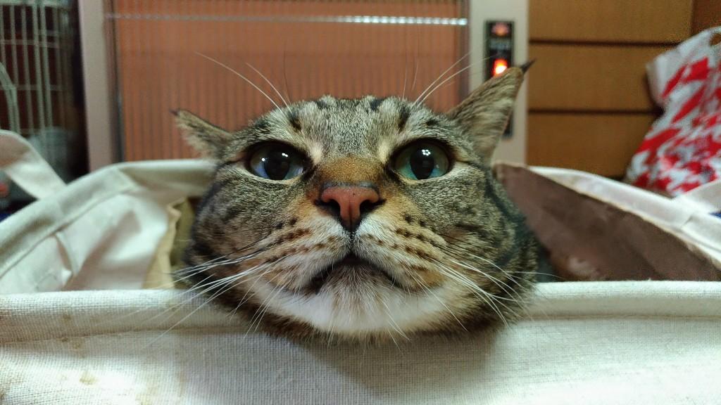 【ネコ】今日2月22日は猫の日、猫の名前ランキングで1位に輝いたのは?