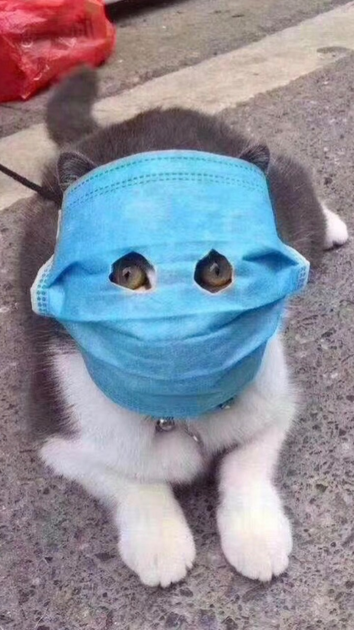 【国民の皆様へ】新型コロナウイルス「感染しても通常の風邪などの重度でない症状にとどまります」2月11日