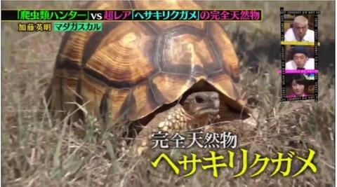 【ヤラセ】人気番組 クレイジージャーニーやらかす(炎上)