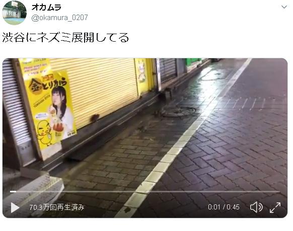 【動画】渋谷がネズミだらけになってる!! ←10万いいね!